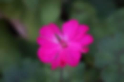 mean-box-blur