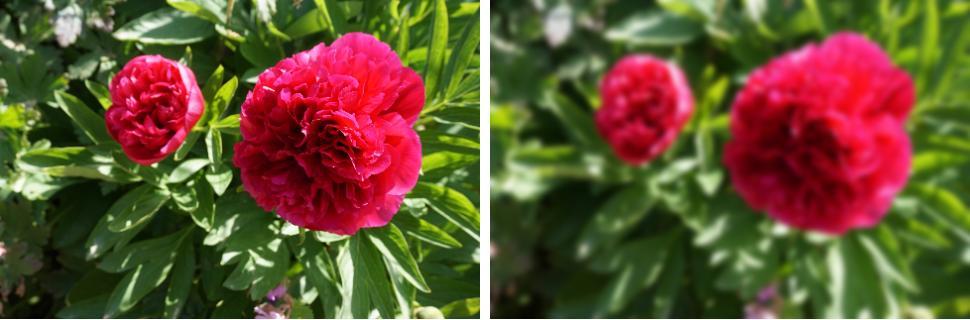 flowers gaussian blur filter example